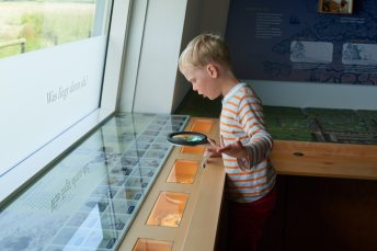 Exploring the Wadden Sea creatures