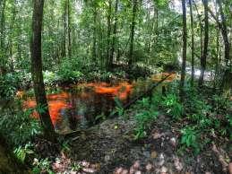 Beautiful jungle trek