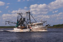 A shrimper going out